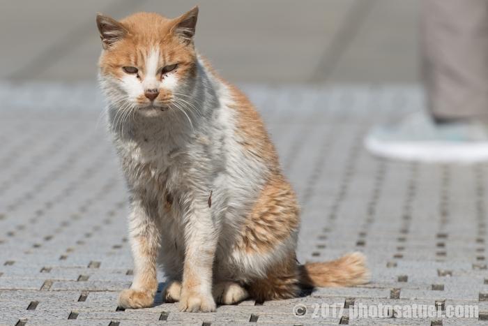 公園の主 猫