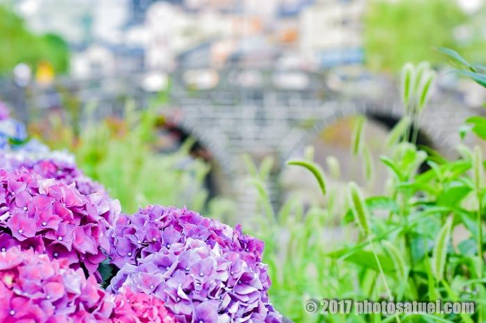 ながさき紫陽花まつり