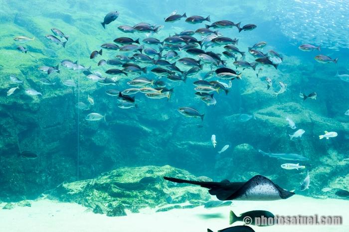 海きらら 水族館