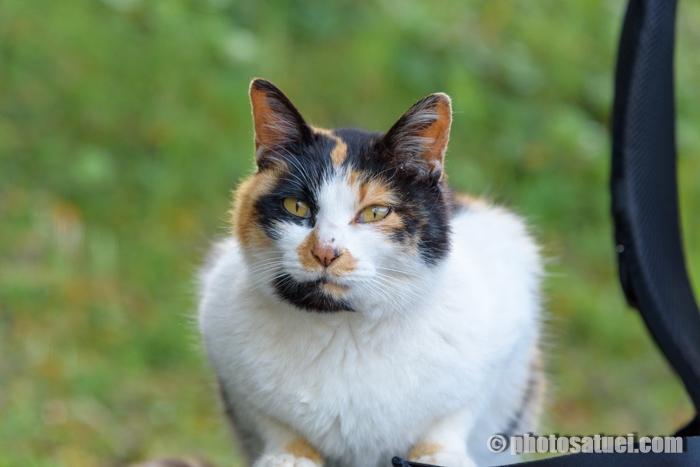 長崎 西海橋 猫