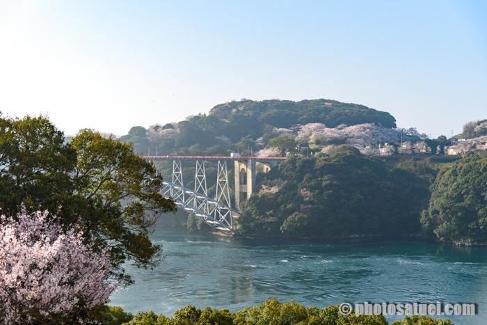 長崎 西海橋公園の桜